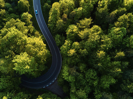 street between large trees from top with drone aerial view, landscape