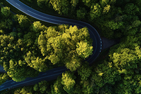 street between large trees from top with drone aerial view, landscape, green Stock Photo