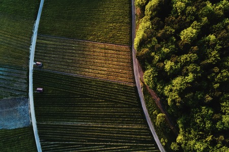 vineyards landscape on the hill from top with drone Stockfoto