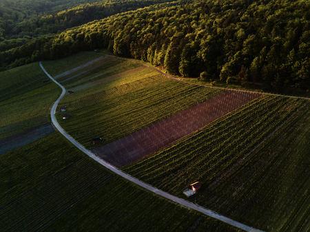Weinberge Landschaft auf dem Hügel von oben mit Drohne