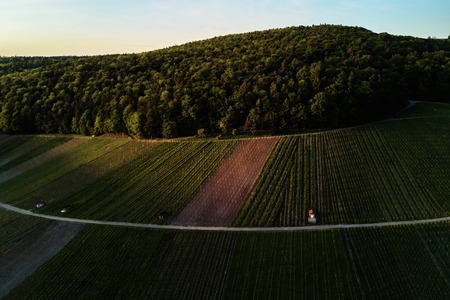 vineyards landscape on the hill from top with drone Standard-Bild