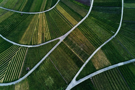 vineyards landscape on the hill from top, aerial view Stock Photo