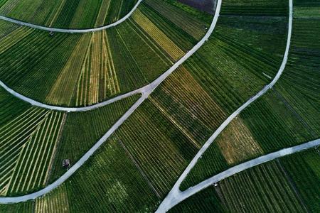 Weinberge Landschaft auf dem Hügel von oben, Luftaufnahme