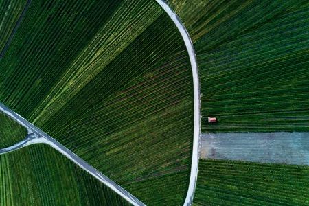 wijngaarden landschap op de heuvel van top met drone