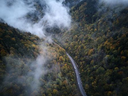 street from above trough a misty forest at autumn, aerial view flying through the clouds with fog and trees