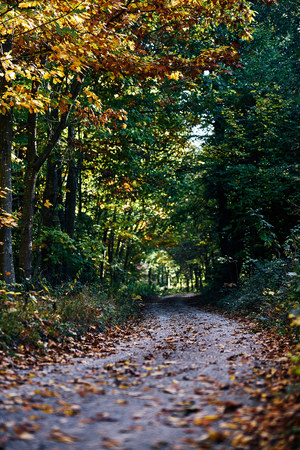 path going trough the dark autumn forest with many leaves on the floor. fall