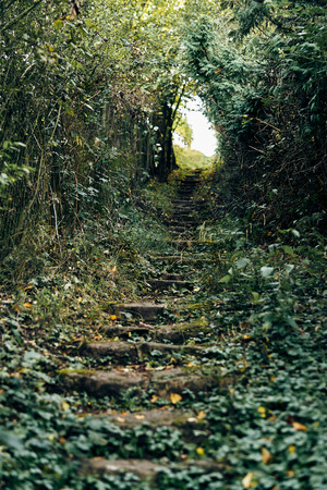 over grown stair steps with leafs and nature on the staircase going uphill. Narrow field of view. Bokeeh detail