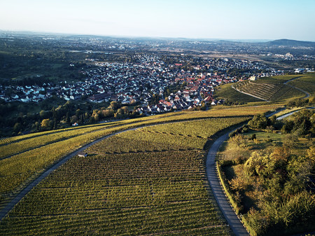 vineyards landscape on the hill from top with drone, green structure nature, dji