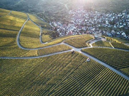 vineyards landscape on the hill from top with drone, green structure