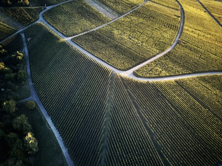 vineyards landscape on the hill from top with drone, Stuttgart