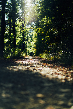 Road in a beautiful forest in the morning. Low sun shining through the leaves on the trees. Bokeh detail view from low bottom 写真素材