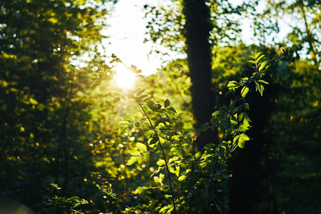 green tree leaves. Looking above the forest. Leaf with sun shining through. Misty blue warm look 写真素材