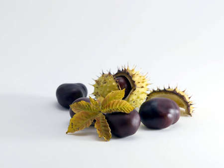 Some conkers with paring and leaf on white background