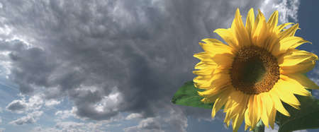 Thunderclouds and a sunflower in the foreground Imagens