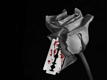 roses and blood: A black and white image of a rose with a bloody razor blade Stock Photo