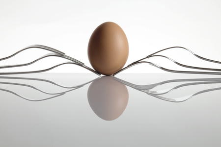 hen's: The image shows a hen s egg