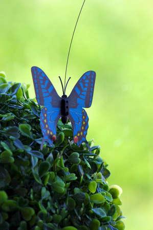 lampe: Boulle de buis et papillon decoration Stock Photo