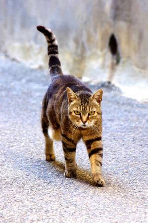 cat walk: Cat walk