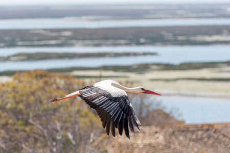 Stork in flight with beautiful background scenery Imagens