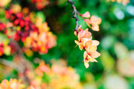 Autumn colors in flora Banco de Imagens - 89106126