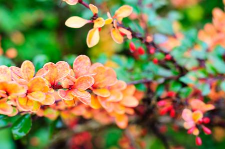 Autumn colors in flora