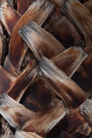 Palm tree texture close up Banco de Imagens - 95516319