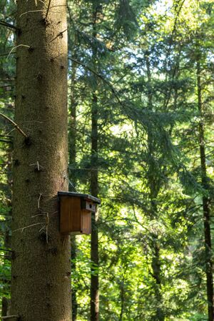 A wooden nesting box attached to a tree in the black forest in summer Banco de Imagens