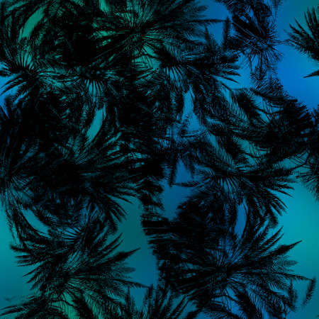 Miami night tropical black foliage on sunset blur