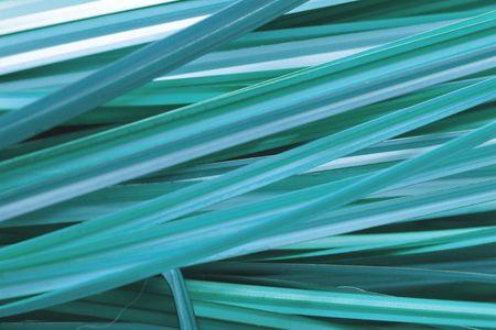 Grass Background aqua