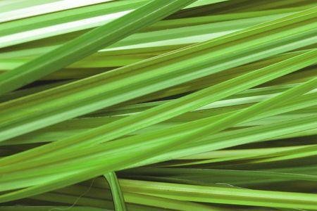 semblance: Sfondo di erba verde Archivio Fotografico