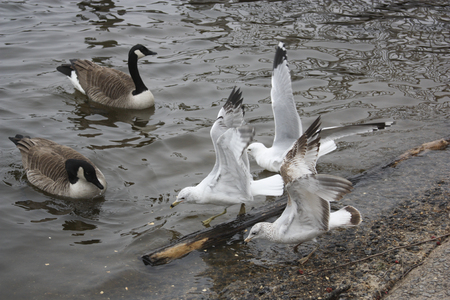 the fittest: Waterfowl I