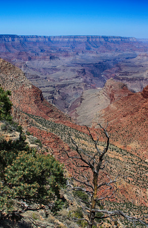 tributary: Grand Canyon with buttes, greenery