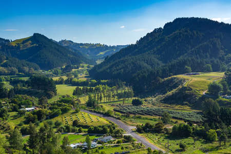 Hilly countryside in New Zealand, with farms in the valleys and pine plantations growing on small mountains. Waitao, Bay of Plenty