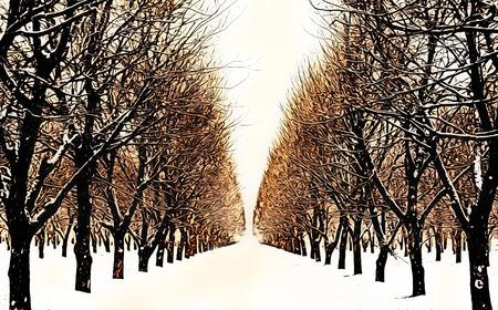 Pecan grove photo illustration