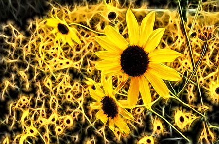 Illustration - Blooming sunflowers at Bitter Lake Wildlife Refuge near Roswell, New Mexico. Stok Fotoğraf