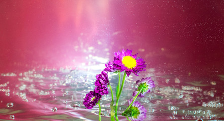 Purple flower in bubbly water with a magenta background