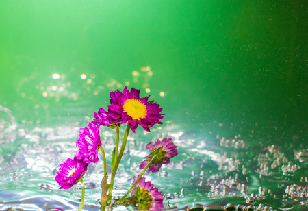 Purple flower in bubbly water with a bright green background
