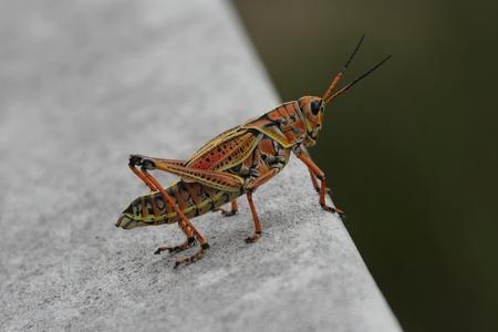 destructive: Grasshopper