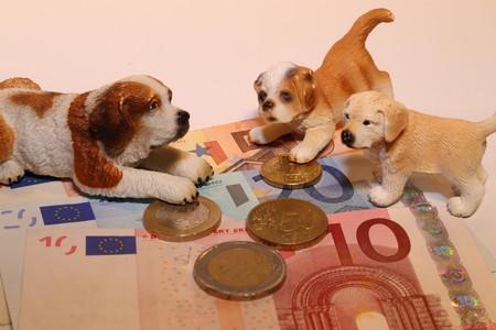 dog license fee