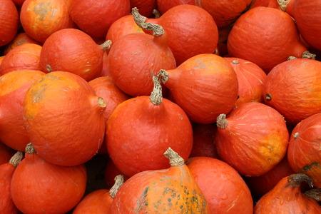 pumpkin Standard-Bild