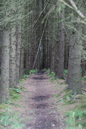 Forest road Standard-Bild
