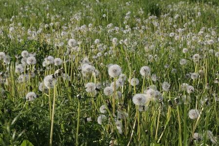 Meadow Stockfoto - 122399963