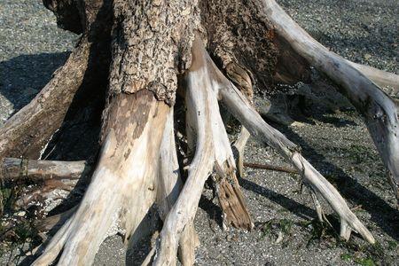ビーチでの死んだ木の幹 写真素材