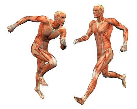 muscle anatomy: muscle man posing w clipping mask
