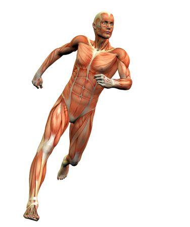 Anatomía hombre # 3  Foto de archivo - 281195