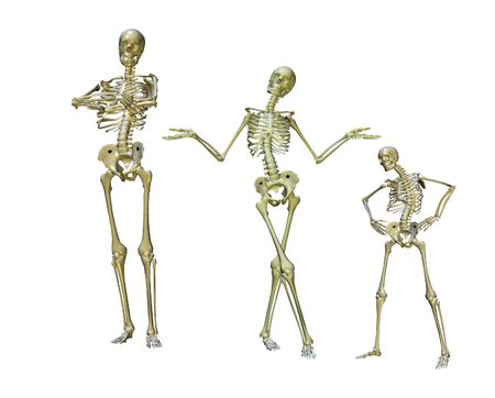 a group of posed skeletons