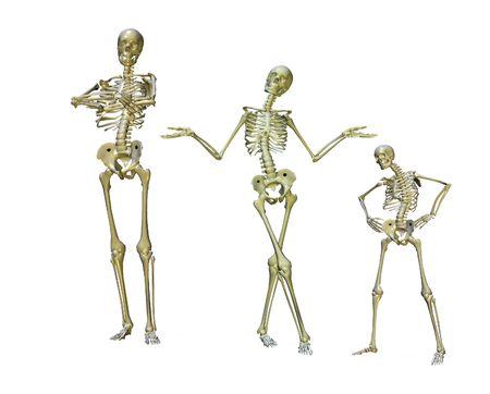 squelette: Un groupe de squelettes pos�es