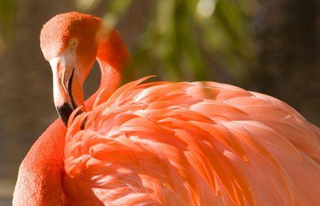 kept: bright flamingo