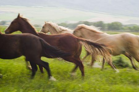 stampede: running horses (blurred)
