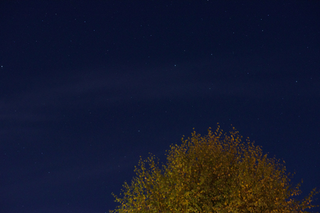 Autumn silver birch tree with night sky above Stock Photo